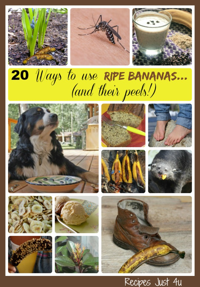 20 Ways to use ripe Bananas (and their peels!) - recipesjust4u.com/ripe-banana-uses