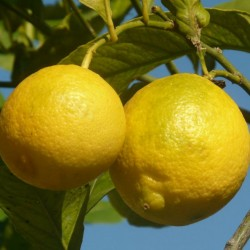 tips for using lemons