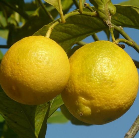 tips for using lemons