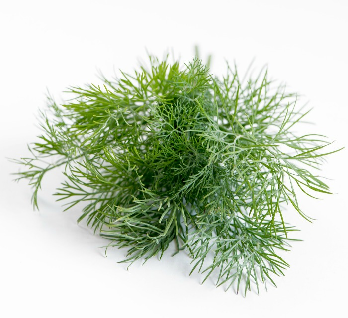 Dill makes a great seasoning for fish and seafood.