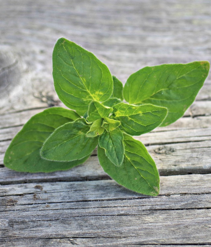 Fresh oregano is a great herb to use on pizzas.