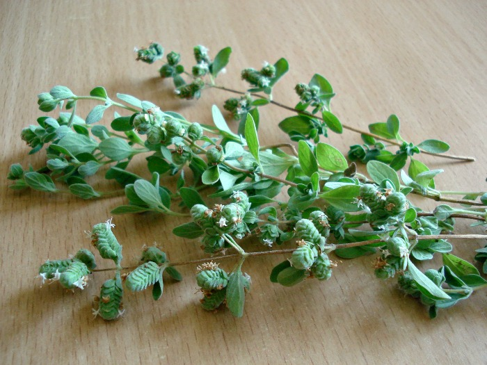 Fresh marjoram is similar to oregano but has a sweeter flavor.